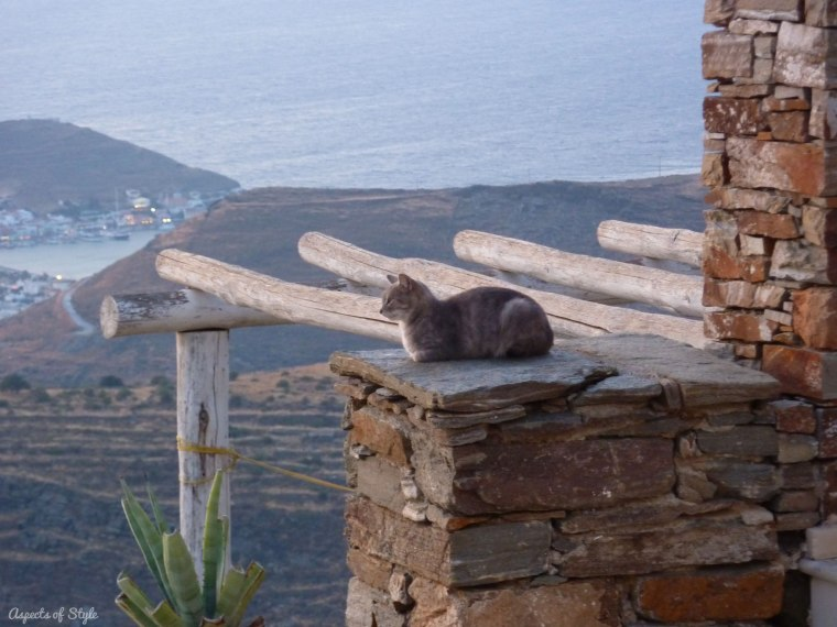 a cat in Kea