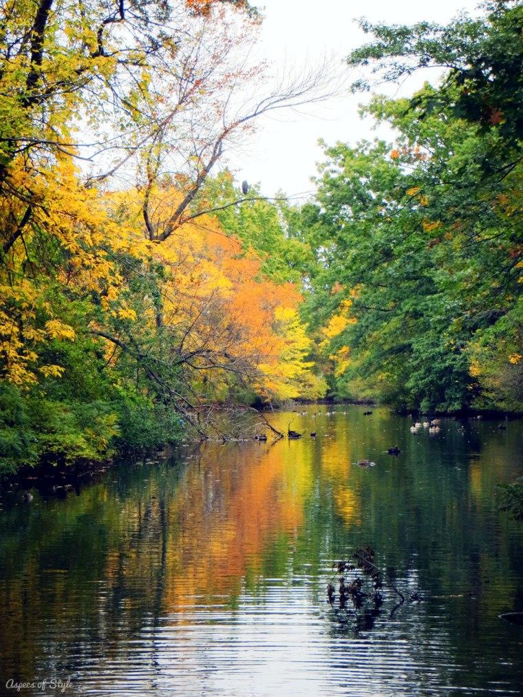 fall foliage and lake reflection