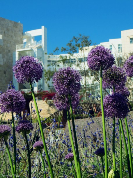 Getty Center central garden